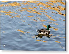 Golden Ripples Acrylic Print by Keith Armstrong
