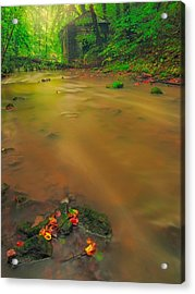 Acrylic Print featuring the photograph Golden River by Maciej Markiewicz