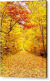 Golden Trail Acrylic Print by Andrea Dale