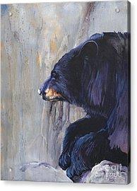 Grandfather Bear Acrylic Print