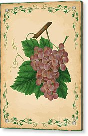 Grapes Illustration Acrylic Print by Indian Summer