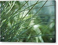 Grass Abstract Acrylic Print by Sabina  Horvat