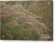 Grass Together In A Group Acrylic Print by Tosporn Preede