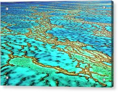 Great Barrier Reef Acrylic Print by Bildagentur-online/mcphoto-schulz
