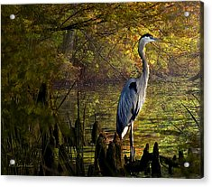 Acrylic Print featuring the digital art Great Blue Heron Wading by J Larry Walker