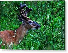 Great Smoky Mountains Acrylic Print