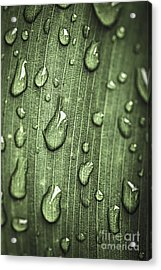 Green Leaf Abstract With Raindrops Acrylic Print