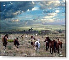 Greener Pastures Acrylic Print by Bill Stephens