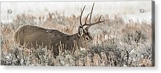 Greeting A Frosty Dawn Acrylic Print by Yeates Photography