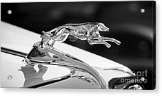 Greyhound Hood Ornament Acrylic Print by Chris Dutton