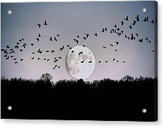 Guided By The Moon Acrylic Print by Larry Trupp
