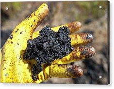 Hand Full Of Tar Sand Acrylic Print by Ashley Cooper
