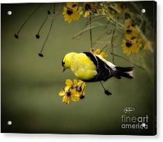 Hang On Acrylic Print by Cris Hayes