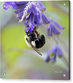 Hanging In There Acrylic Print by Suzanne Gaff