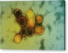 Hantavirus Particles Acrylic Print by Ami Images