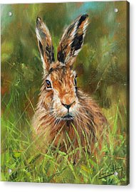 hARE Acrylic Print by David Stribbling