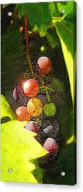 Harvest Time Acrylic Print by Ron Regalado