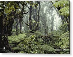 Hawaiian Rainforest Acrylic Print by Gregory G. Dimijian, M.D.