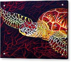 Hawksbill Turtle Acrylic Print by Debbie Chamberlin