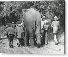 Hazel The Elephant Says Goodbye To Freedom Acrylic Print by Retro Images Archive