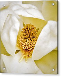 Heart Of Magnolia Acrylic Print by Debra Crank
