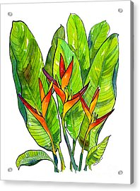 Heliconia Acrylic Print by Diane Thornton