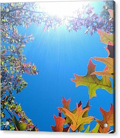 Hello Autumn Acrylic Print by CML Brown