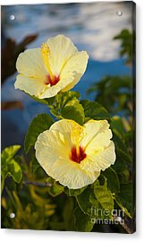 Acrylic Print featuring the photograph Bright Yellow Hibiscus by Roselynne Broussard