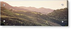High Angle View Of A Vineyard Acrylic Print