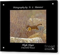 High Flyer Acrylic Print by Dennis Hammer