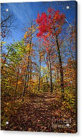 Hiking Trail In Fall Forest Acrylic Print