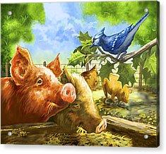 Hog Heaven Acrylic Print by Nate Owens