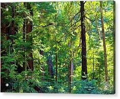 Hoh Rain Forest Acrylic Print