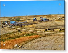 Home On The Range Acrylic Print by Kelly Reber