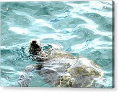 Acrylic Print featuring the photograph Kamakahonu, The Eye Of The Honu  by Lehua Pekelo-Stearns