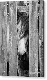 Horse Board Acrylic Print