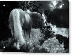Horse Acrylic Print by Christine Sponchia