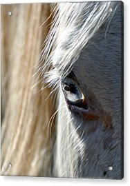 Horse Eye Acrylic Print by Savannah Gibbs