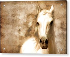 Horse Whisper Acrylic Print by Athena Mckinzie