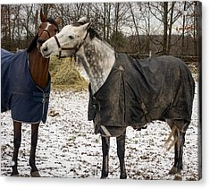 Horse Whispers Acrylic Print
