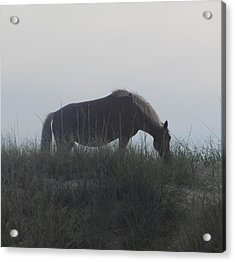 Horses Of Corolla 5 Acrylic Print by Cathy Lindsey
