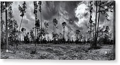 Houston Memorial Park Drought Acrylic Print by Joshua House