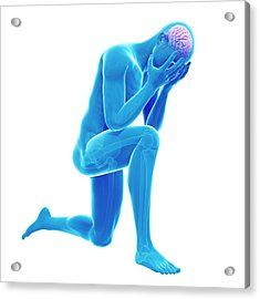 Human Brain Acrylic Print by Sebastian Kaulitzki