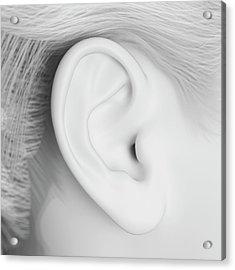 Human Ear Acrylic Print by Sebastian Kaulitzki