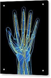 Human Hand Nerves Acrylic Print by Sebastian Kaulitzki
