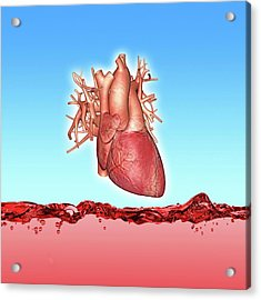 Human Heart Acrylic Print by Alfred Pasieka