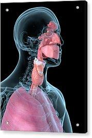 Human Throat Acrylic Print by Sciepro