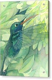 Hummingbird And Chrysanthemum Acrylic Print