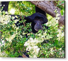 Acrylic Print featuring the photograph I See You by John Johnson