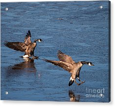 Acrylic Print featuring the photograph Icy Landing by Dale Nelson